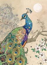 Peacock Card - Blank