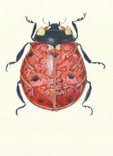 DM, Ladybug Card
