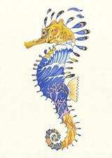 DM, Seahorse