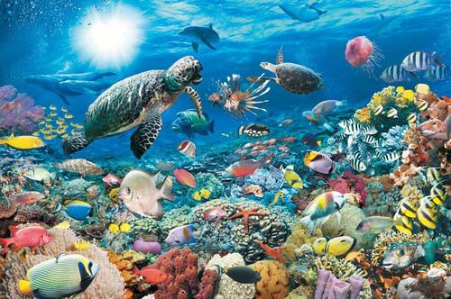 Underwater Tranquility (17426)