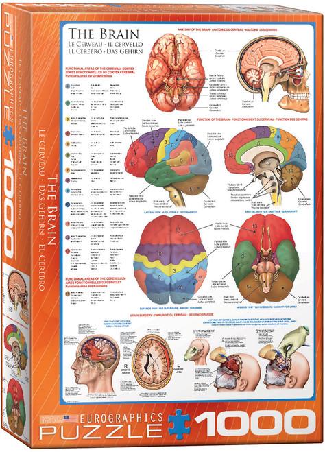 The Brain (EU60000256)