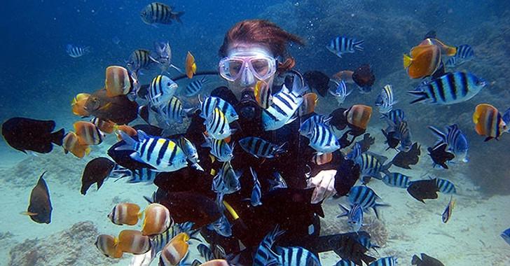 PADI Scuba Referral Certification Dives