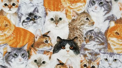 Cats, Cats, Cats - 125