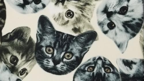 Black & Sepia Cats - 44