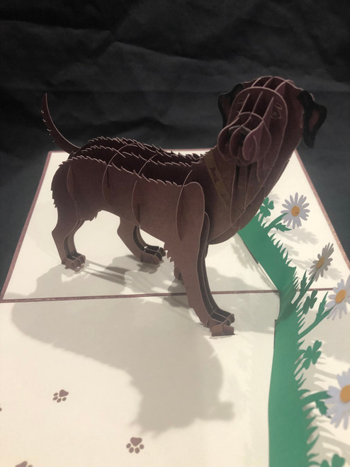 Handmade 3D Kirigami Card  with envelope  Chocolate Labrador Dog