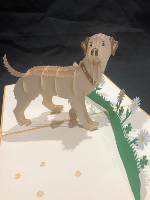 Handmade 3D Kirigami Card  with envelope  Yellow Labrador Dog
