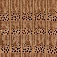 red-oak-endgrain-zoommm.jpg