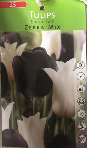 Tulips Single Late Zebra Mix - Pack of 25