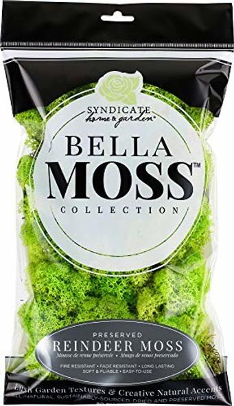 Bella Moss 1406121080 Reindeer Bag Moss, Chartreuse