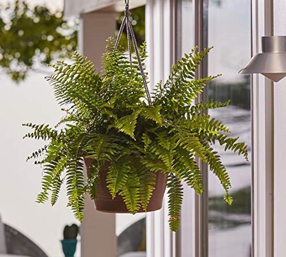 "Bloem CLNHB12-54 Colonnade Wood Resin Hanging Basket 12"" Forest Green"