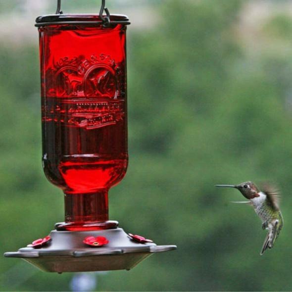 More Birds Glass Hummingbird Feeder, 13 Oz Nectar Capacity