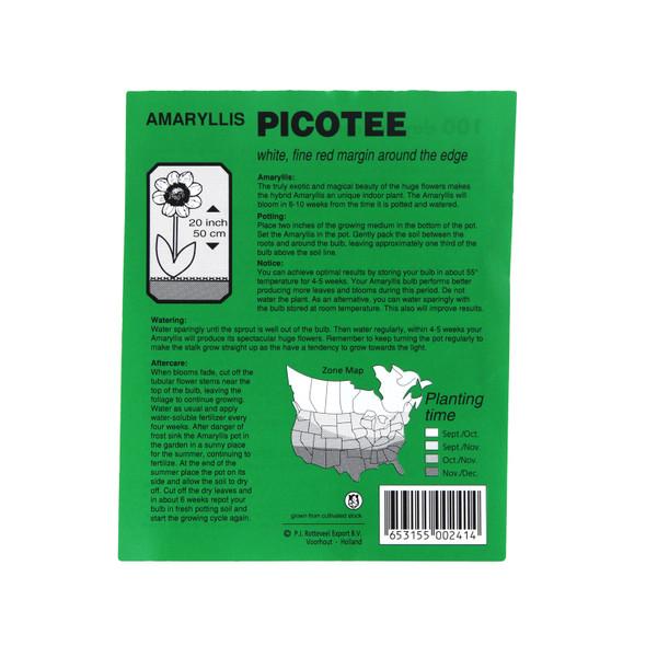 Rotteveel 34/+cm Picotee Amaryllis Bulb, QTY 1