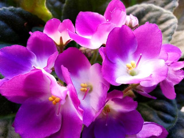 blossom-3702068-640.jpg