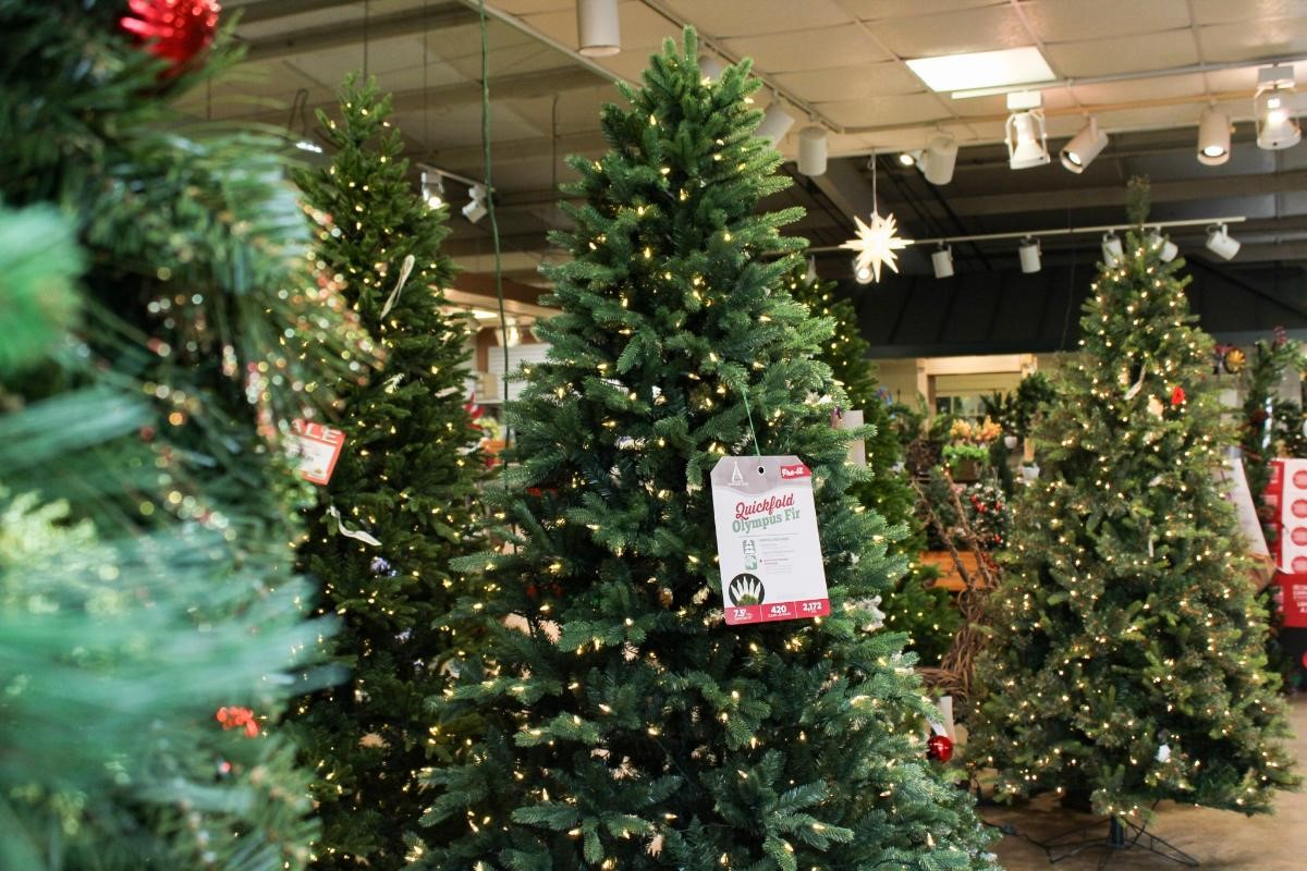 christmas-trees.jpg