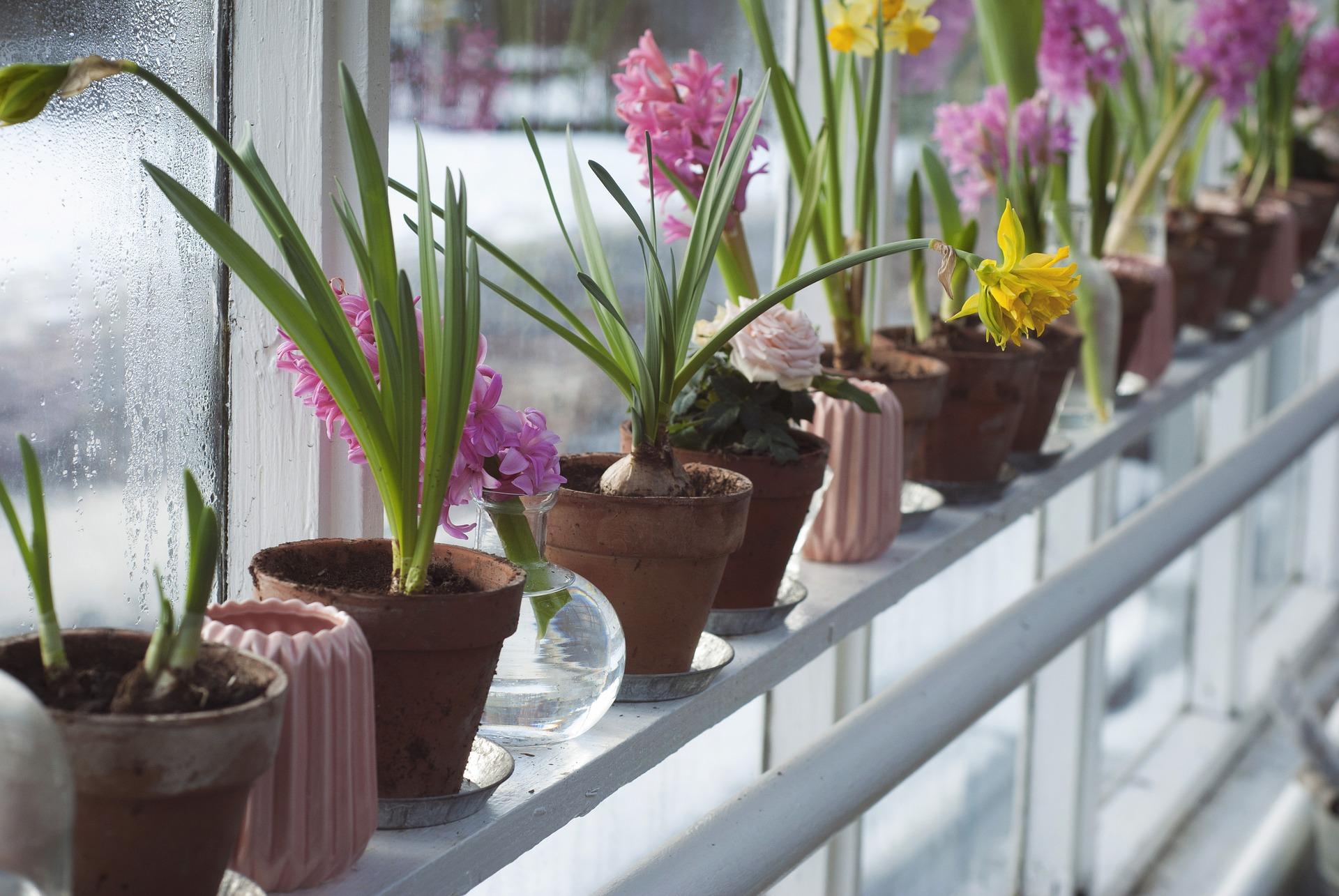 flower-bulbs-indoors.jpg