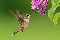 hummingbird-garden.jpg