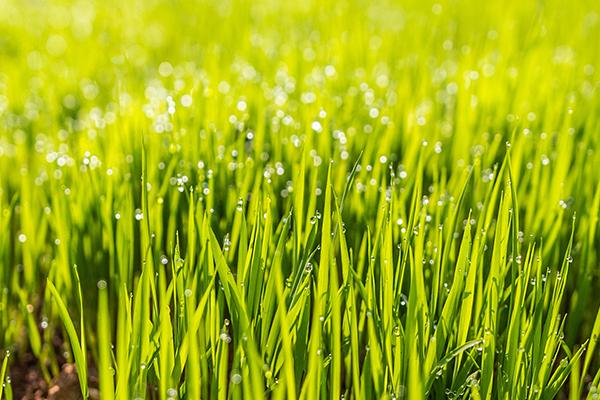 lawn-tip.jpg