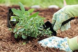 mulch-planting.jpg