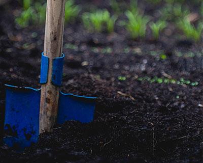 mulching.jpg