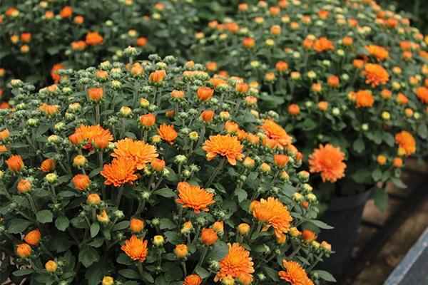 mum-gardening-tips.jpg