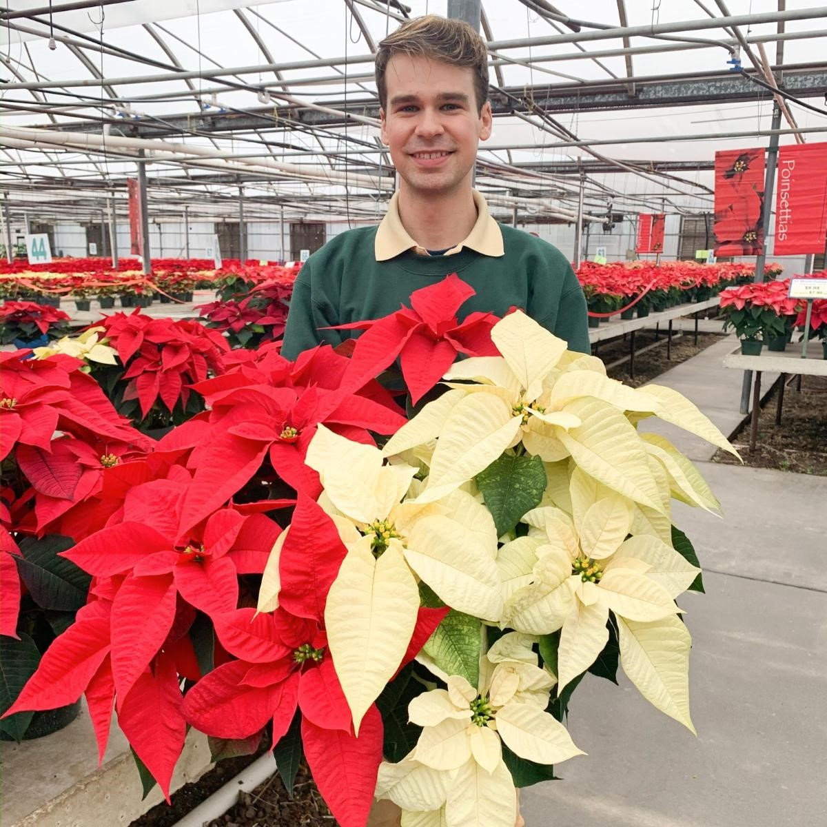poinsettia-8.5-inch-pot-triple-branched-24.99.jpg