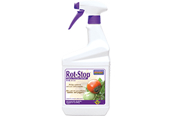 rot-stop-article-photo.jpg