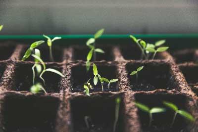 seed-starting-web.jpg