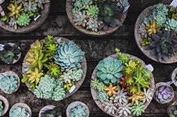succulent-concrete-planters-assorted.jpg