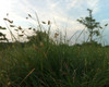 Native Wonder - Native Grass Mixture