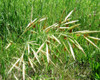 Mountain Pass - Native Grass Mixture