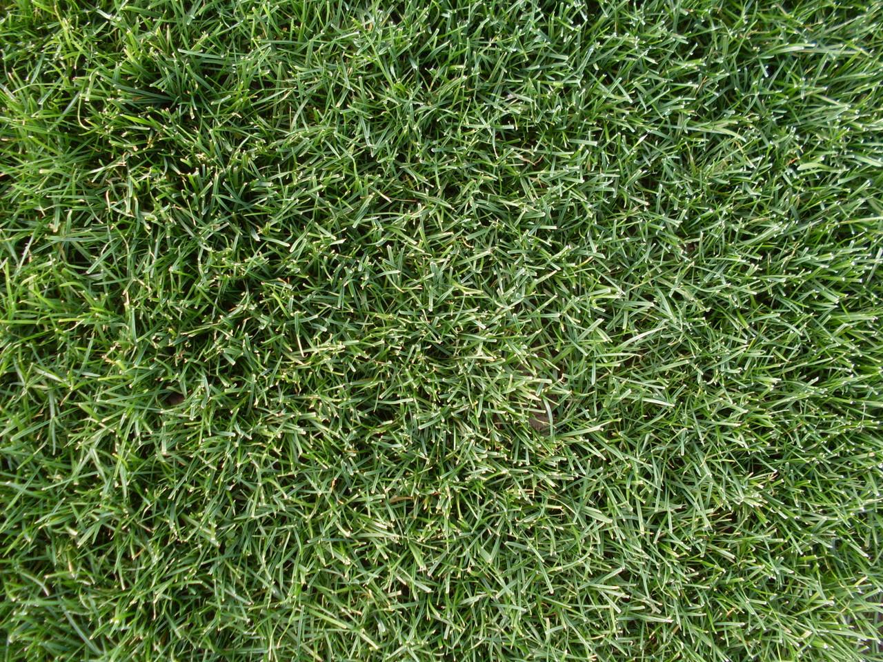 Perennial Ryegrass Quickstart Blend