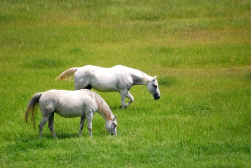 Equestrian Mix - Pasture Grass Mixture