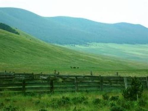Mountain Pass - Native Grass Mixture