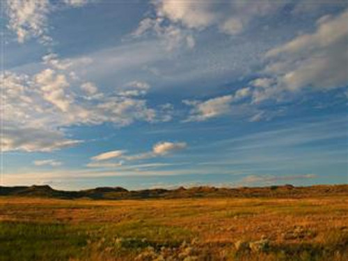 Pioneer's Pride - Native Grass Mixture