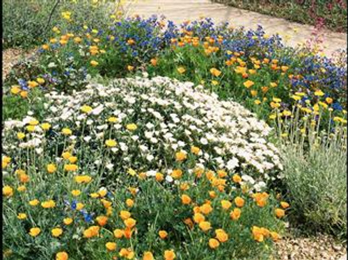 Sonora's Bloom Wildflower Mixture