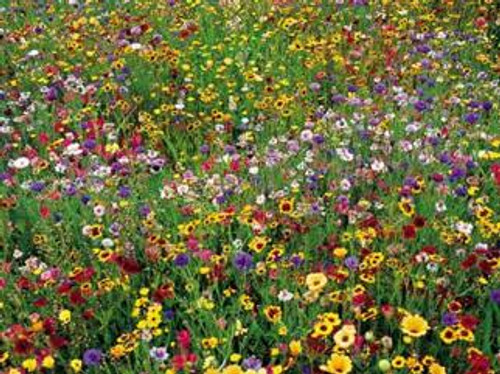 Llano Estacado Wildflower Seed Mixture