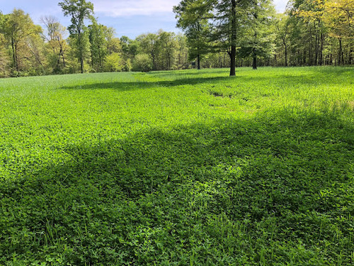 Fall Cover Crop Mix