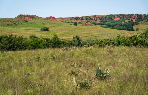 Cheyenne Indiangrass