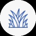 grass Pasture