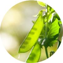 Legumes Services