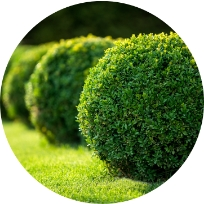 Shrubs And Forbs Services