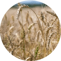 Small grains Services