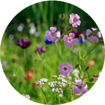 Wildflowers Services