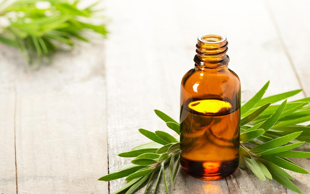 Top 10 Tea Tree Oil Uses and Benefits
