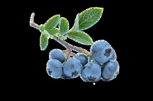 Blueberry Sugar- Pre buy