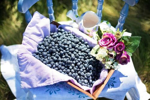 Blueberry Cobbler- Pre buy