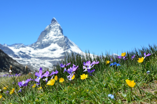 Alpine Cheer