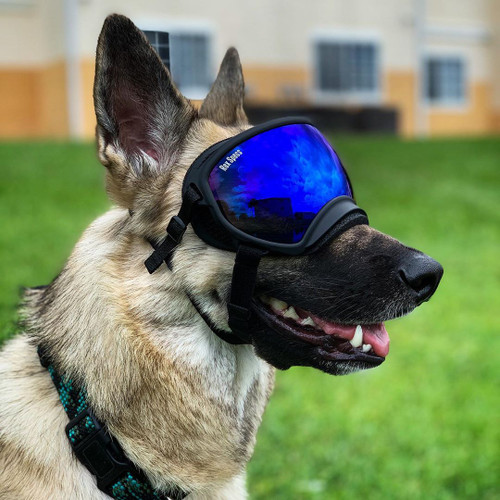 Rex Specs dog goggles are protective eye-wear for the active dog. They are stable and secure while still allowing for full jaw motion and field of view. Rex Specs protect your dogs eyes from debris, environmental hazards, and sun.