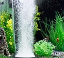 Aquarium & Fish Tank Supplies
