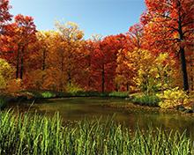 Seasonal Pond Supplies